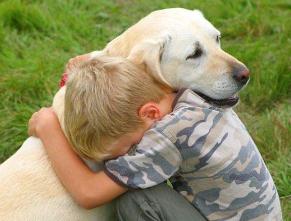 Πως θα βοηθήσετε ένα ζώο όταν του έχουν ρίξει φόλα;